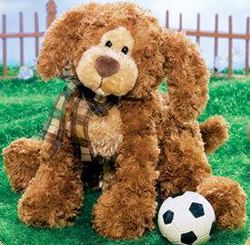 Shaggy Reddish Brown Large Dog