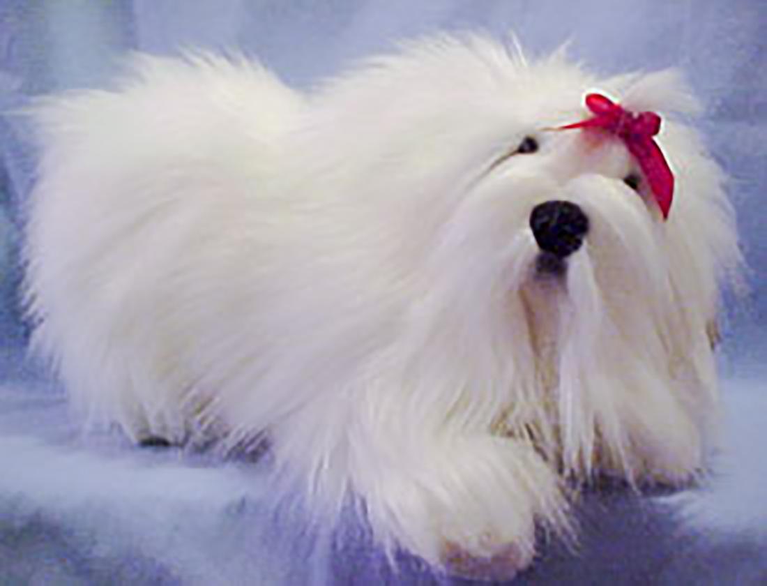 Cuddly Collectibles Plush Maltese Collectibles
